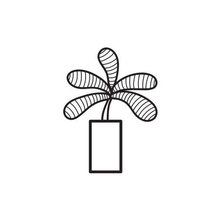 chlorophyll: Potted plant