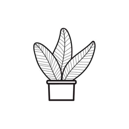 chlorophyll: Plant