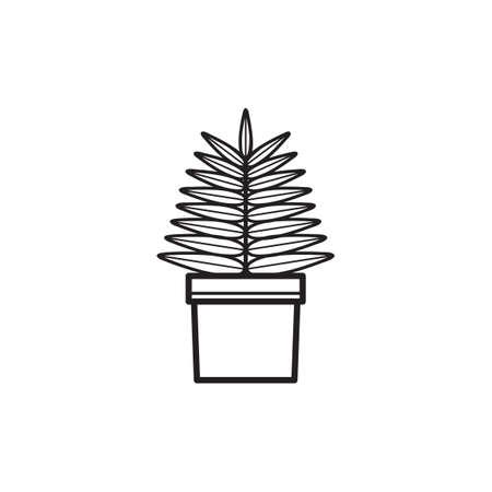 chlorophyll: Fern plant