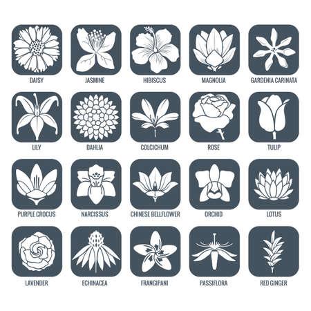 꽃 아이콘 스톡 콘텐츠 - 43248052