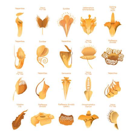 食虫植物セット