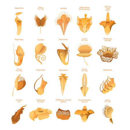 arum flower: Set of carnivorous plants