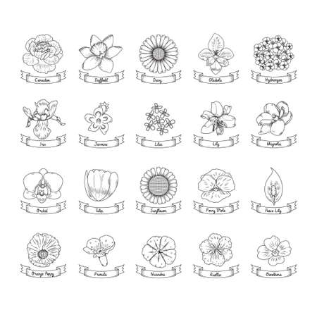 primula: Collection of flowers