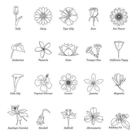 Set of flowers 向量圖像