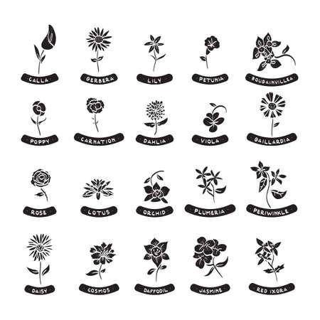 bougainvillea: Set of flowers Illustration