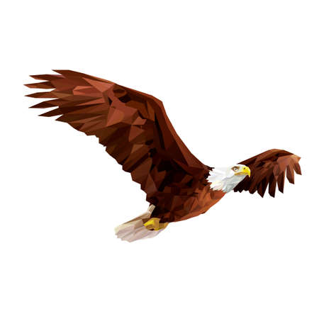 eagle flying: Bald eagle Illustration