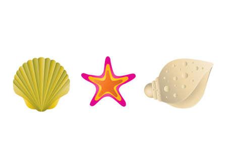 scallops: Sea shells Illustration