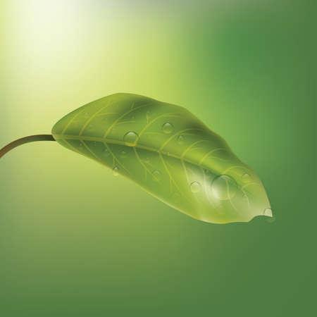 dewdrop: Leaf