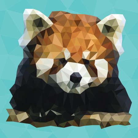 nocturnal: Raccoon