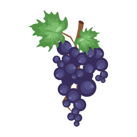purple grapes: Grapes