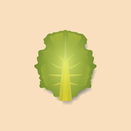leaf lettuce: lettuce leaf