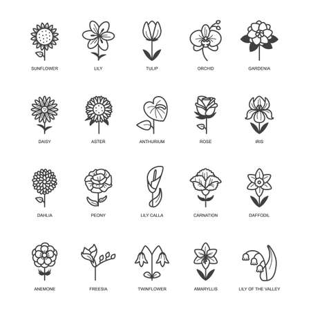 Set of flower icons Illustration