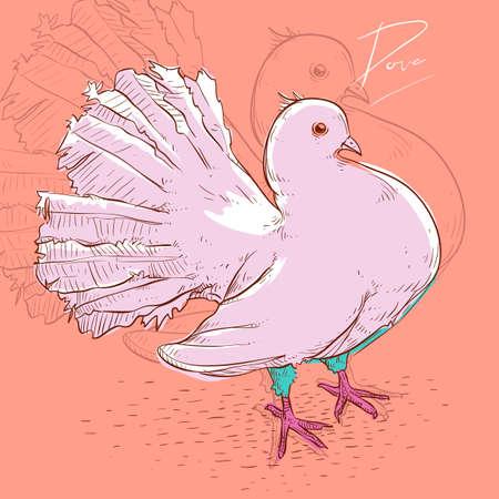 beak pigeon: Dove