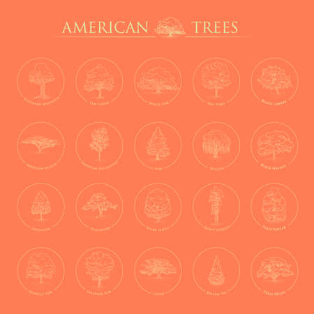 balsam: Set of american trees Illustration