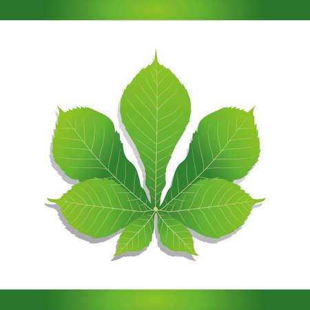 in common: Common horse chestnut leaf Illustration
