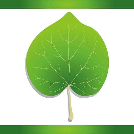 redbud: Eastern redbud leaf
