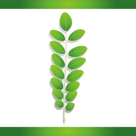 szarańcza: Black locust leaf