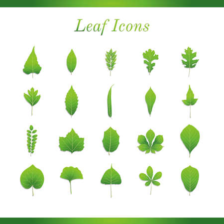sycamore leaf: Collection of leaves icons Illustration