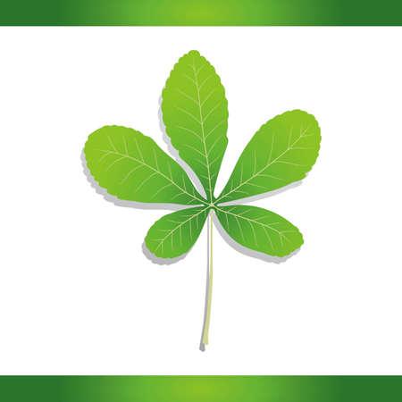 buckeye: Yellow buckeye leaf