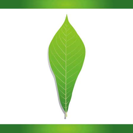 in common: Common pawpaw leaf