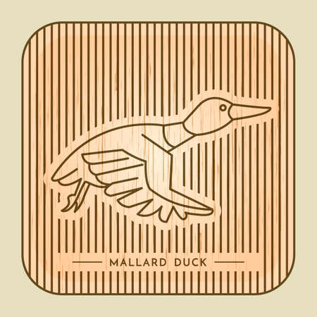 mallard duck: Mallard duck Illustration