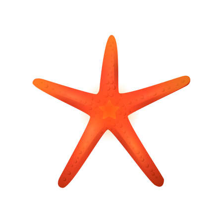 bumpy: Starfish