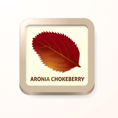 chokeberry: Aronia chokeberry leaf