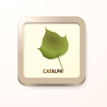 catalpa: Catalpa leaf Illustration