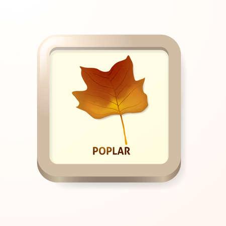 poplar: Poplar leaf
