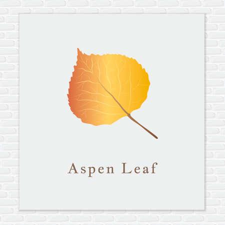 아스펜 잎