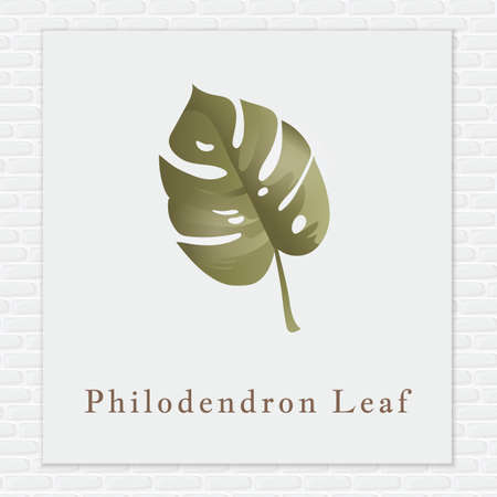 philodendron: Philodendron leaf Illustration