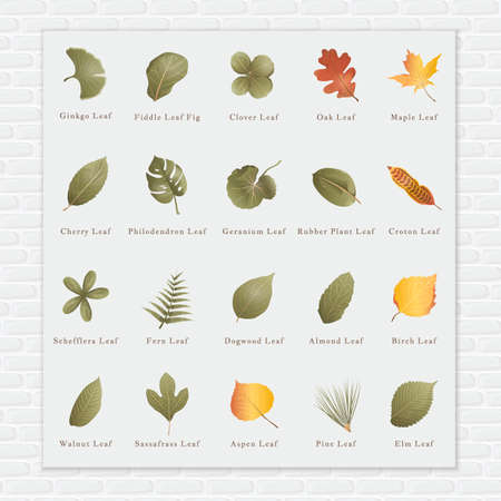 philodendron: Collection of leaves Illustration