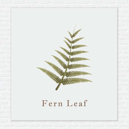 fronds: Fern leaf Illustration