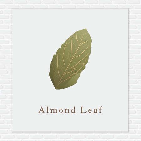 almond: Almond leaf