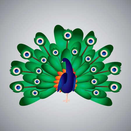 diurnal: Peacock