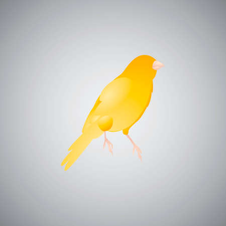 canary bird: Yellow canary bird Illustration