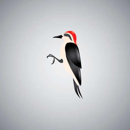 woodpecker: Red-bellied woodpecker Illustration
