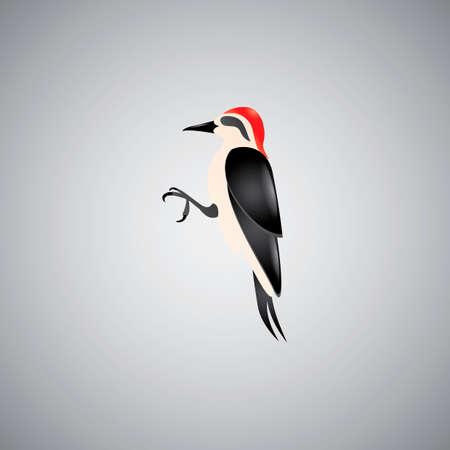 diurnal: Red-bellied woodpecker Illustration