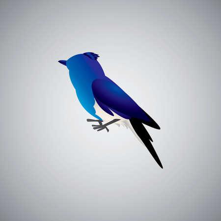 diurnal: Blue jay bird