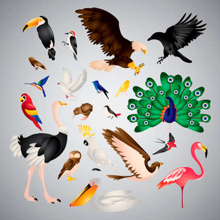 redheaded: Set of birds Illustration