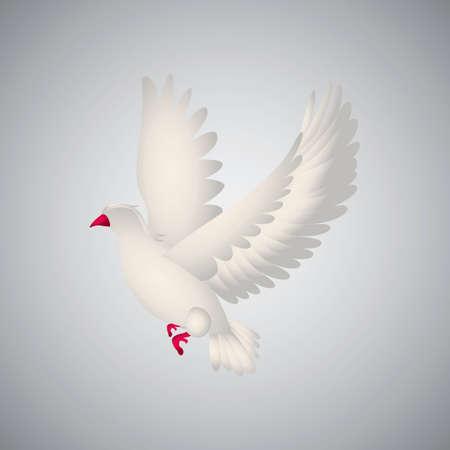 Red-billed gull Illustration