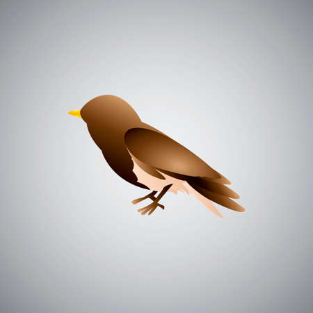 sparrows: White-crowned sparrow Illustration