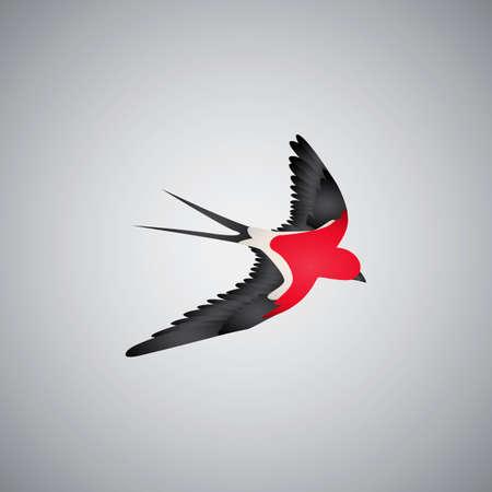 and diurnal: Swift bird