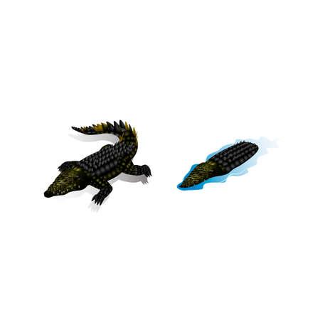 backview: Isometric crocodiles