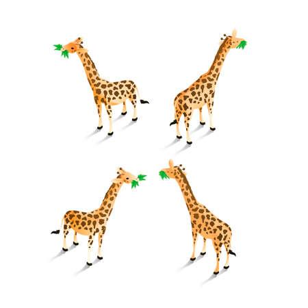 backview: Isometric giraffes Illustration