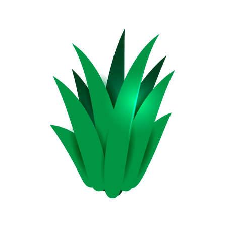 aloe vera: Isometric aloe vera plant Illustration