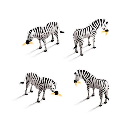 backview: Isometric zebra Illustration