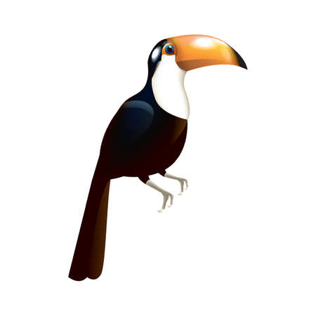 toucan: toco toucan Illustration