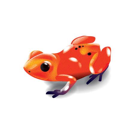smallest: brazilian gold frog