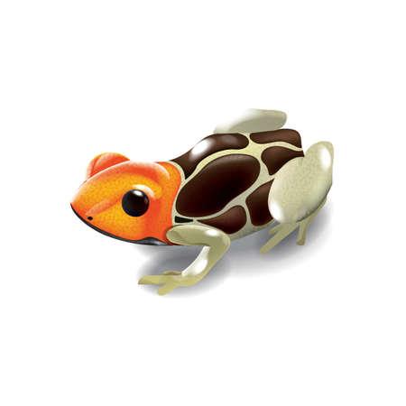 brazilian: brazilian gold frog
